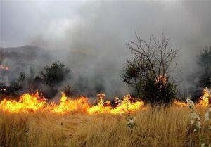 آتش سوزیهای مشکوک در مزارع عراق +عکس