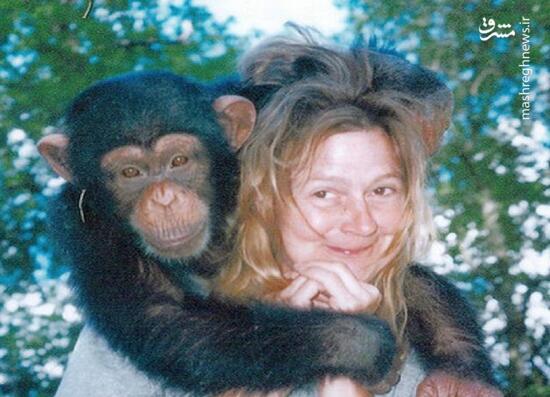 تراويس،ساندرا،شامپانزه،خانواده،خانه،دست،هرولد،خودرو،زندگي،حمله،…