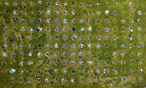 عکس/ فاصله اجتماعی با کشیدن دایره در پارک