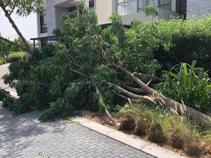 عکس/ خسارت وزش باد شدید در دبی