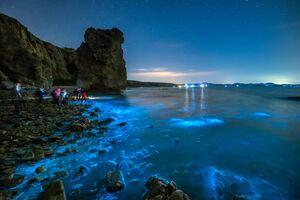 عکس/ پدپدهای جالب در سواحل چین