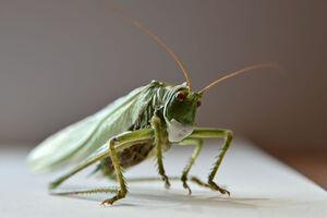 عکس/ وقتی حشرات ماسک میزنند