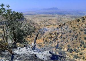 مهار کامل آتش سوزی جنگلهای گچساران