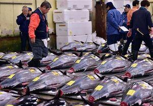 چرا تن ماهی گران شد؟