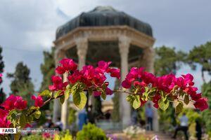 عکس/ حافظیه شیراز بعد سه ماه تعطیلی