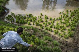 اگه فقط ۱ درصد بهرهوری آب کشاورزی رو زیاد کنیم +فیلم