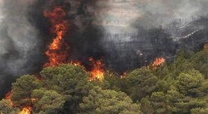 تصاویری از آتشسوزی گسترده در جنگلهای خاییز شهرستان کهگیلویه