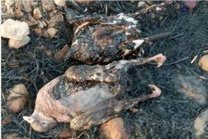 مرگ دردناک پرندگان در میان شعلههای آتش +عکس