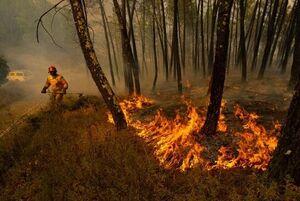 فیلم/ آتشسوزی کوه دیل گچساران و خاییز