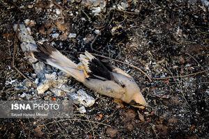 عکس/ مهار آتشسوزی در جنگلهای کرخه