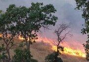 چرا آتش جنگل کهگیلویه دیر خاموش شد؟