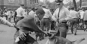 پانصد سال نژادپرستی آمریکایی؛ از واردات برده تا قیام مینیاپولیس +عکس