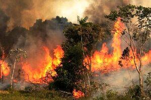 آتش باز هم به جان زاگرس افتاد