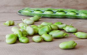 ۸ مورد از گیاهانی که پروتئین بالایی دارند