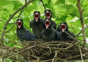 عکس/ گروه سرود پرندگان