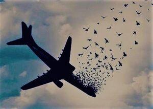 در دور دوم مذاکرات درباره هواپیمای اوکراینی چه گذشت؟