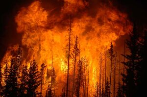 فیلم/ مجازاتی سخت در انتظار مسببان آتشسوزیهای عمدی