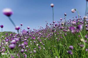 عکس/ سمفونی رنگها در فصل بهار
