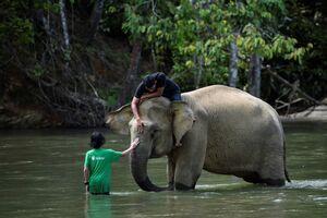 سواری گرفتن از فیل