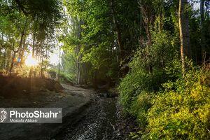 عکس/ طبیعت بکر «چشمه پونه» مشهد