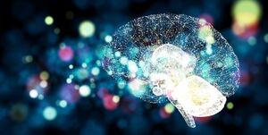 شکر با مختل کردن شبکه عصبی مغز موجب چاقی می شود