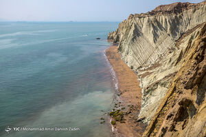 عکس/ صدفی سرخرنگ در خلیج فارس