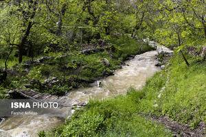 عکس/ بهار کردستان