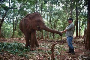 عکس/ فیلهای بیکار