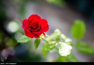 عکس/ روز ملی گل و گیاه
