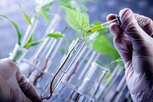 تاثیر مثبت گل و گیاه در تسریع بهبودی بیماران