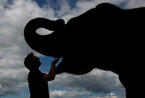 دست در دهان فیل