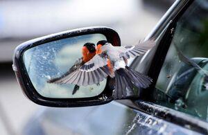عکس/ ژست جالب یک پرنده