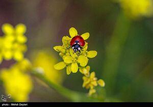 عکس/ طبیعت بهاری منطقه ارسباران