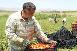 ۱۸ هزار شغل برکت در بخش کشاورزی کردستان