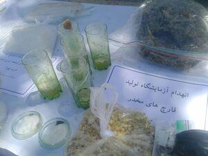 مواد مخدر محبوب سرخ پوستهای آمریکایی در ایران!