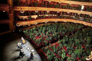 عکس/ اجرای کنسرت برای گیاهان خانگی!