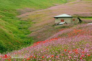 عکس/ بهشت طبیعت جاده اسالم - خلخال