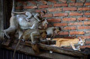 عکس/ گربه آزاری میمونها