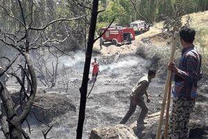 آتشسوزی در باغهای شاهرود +عکس
