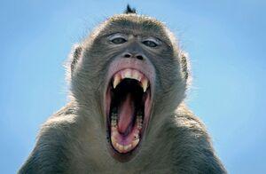 فیلم/ هجوم میمونها به شهر