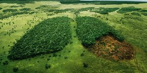 بدون درختان چه بلایی سر زمین میآید؟