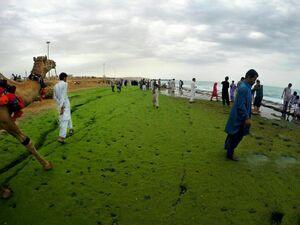 عکس/ پدیده عجیب «ساحل سبز»