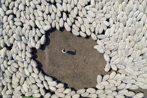 نمای هوایی از گله گوسفند در مزرعه ای در منطقه کاراکابی بورسای ترکیه