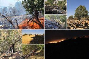 «زاگرس» در آتشِ حریقهای انسانی/ بلوطها زغال میشوند