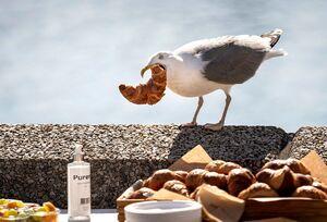 رقص زیبای میش مرغ در آخرین زیستگاه این پرنده +فیلم