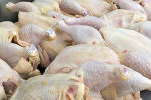 فیلم/ علت اصلی کمبود مرغ در بازار