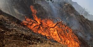 دستگیری ۴۰ نفر در ارتباط با آتشسوزی در جنگلهای کشور