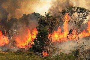 جنگلهای بلوط کوخدان در آتش میسوزد