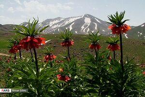 عکس/ عروس کوههای ایران