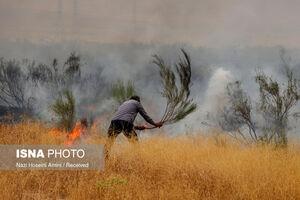 عکس/ آتشسوزی در اراضی جنگلی «بوئینزهرا»